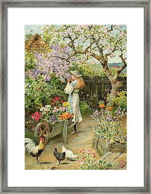 Spring Blossoms Framed Print by William Stephen Coleman