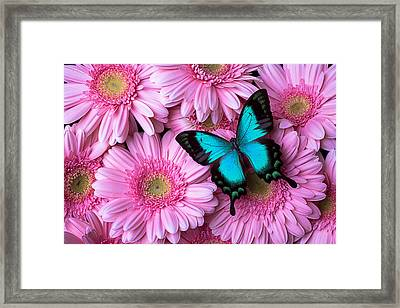 Spring Blue Butterfly Framed Print