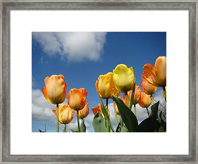 Spring Blue Sky White Clouds Orange Tulip Flowers Framed Print by Baslee Troutman