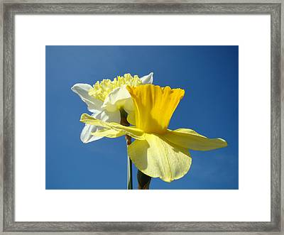 Spring Blue Sky Yellow Daffodil Flowers Art Prints Framed Print by Baslee Troutman