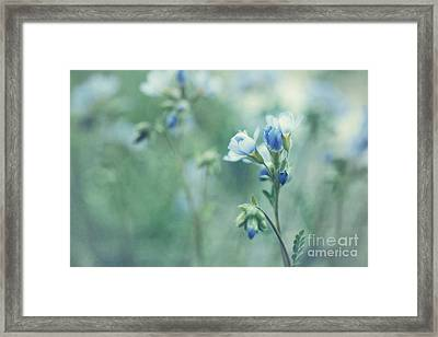 Spring Blues Framed Print by Priska Wettstein