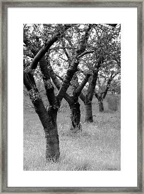 Framed Print featuring the photograph Spring Blush by Penny Hunt