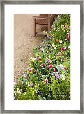 Spring Border Framed Print by Anne Gilbert