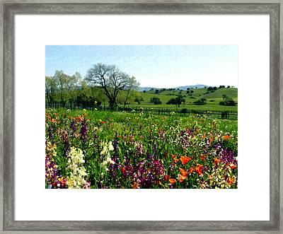 Spring Bouquet At Rusack Vineyards Framed Print