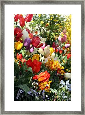Framed Print featuring the photograph Spring Bulb Bonanza by Mary Lou Chmura