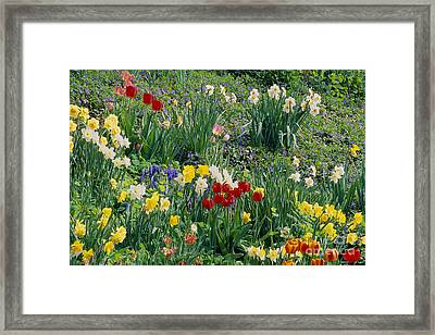 Framed Print featuring the photograph Spring Bulb Garden by Alan L Graham