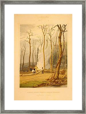 Spring--burning Fallen Trees In A Girdled Clearing--western Framed Print by Litz Collection