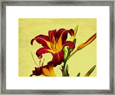 Spring Candor Framed Print