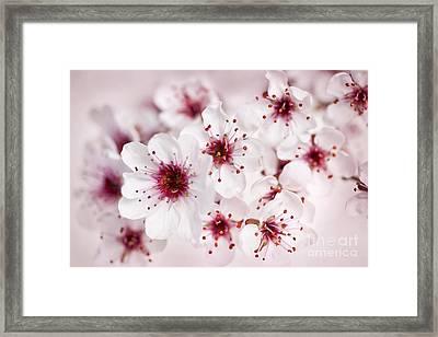 Spring Cherry Blossom Framed Print by Elena Elisseeva