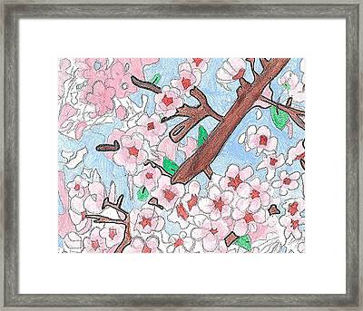 Spring Cherry Blossoms  Framed Print by Fred Hanna