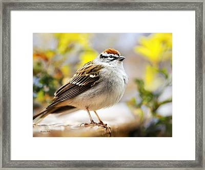 Spring Chipping Sparrow Framed Print