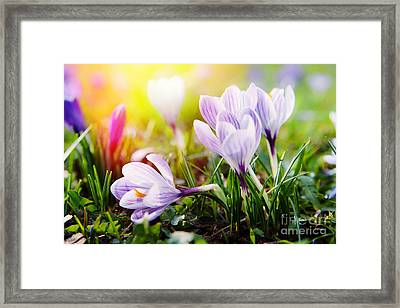Framed Print featuring the photograph Spring by Christine Sponchia