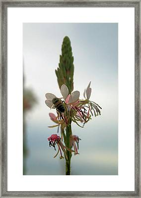 Spring Collection Framed Print by Paulette Maffucci