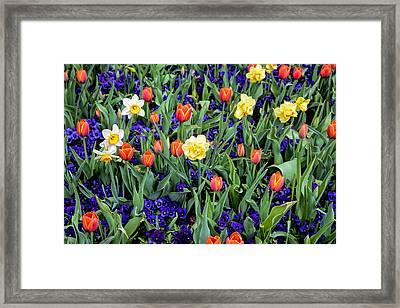 Spring Color Framed Print
