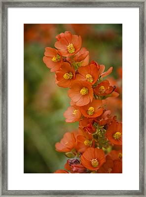 Spring Color  Framed Print by Saija  Lehtonen
