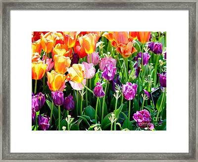 Spring Color Framed Print by Shijun Munns