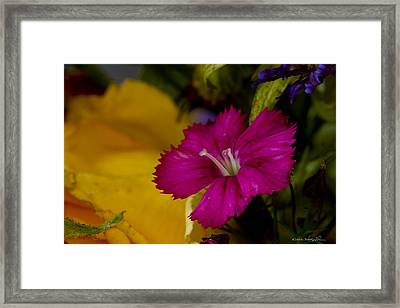 Framed Print featuring the photograph Spring Colors by Kathy Ponce