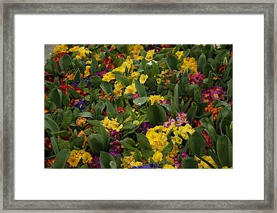 Spring Colour II Framed Print by Maeve O Connell