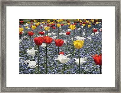 Spring  Colour Framed Print