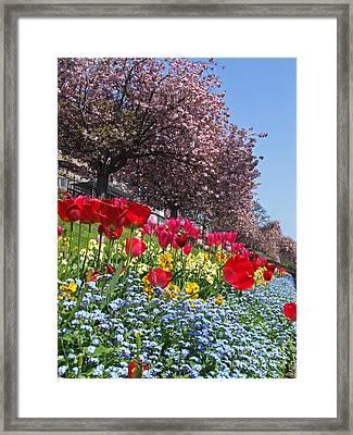 Spring Flowers - Edinburgh Framed Print