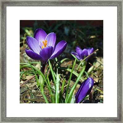 Framed Print featuring the photograph Spring Comes by Mary Zeman