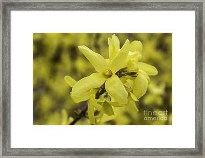 Spring Comes Sofly Framed Print by Arlene Carmel