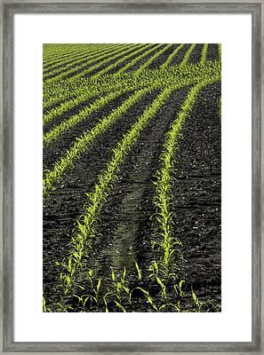 Spring Cornrows Framed Print by Daniel Kasztelan