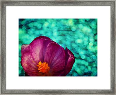 Framed Print featuring the photograph Spring Crocus by Peggy Collins