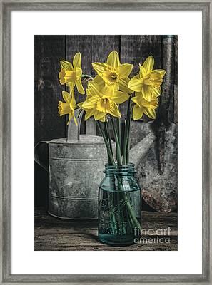 Spring Daffodil Flowers Framed Print by Edward Fielding