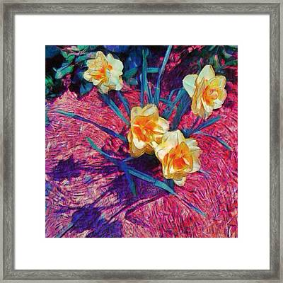 Spring Daffodils On Red - Square Framed Print