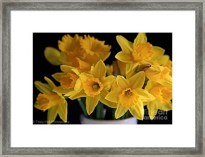 Spring Daffodils Framed Print by Tracy  Hall