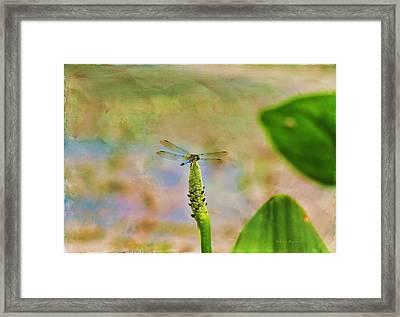 Spring Damsel Framed Print by Deborah Benoit