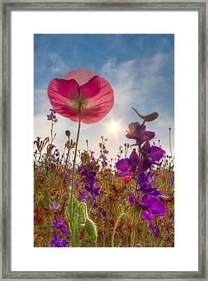 Spring   Framed Print by Debra and Dave Vanderlaan