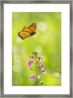 Spring Delight Framed Print by Alice Cahill