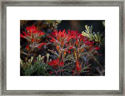 Spring Dew Paintbrush Framed Print
