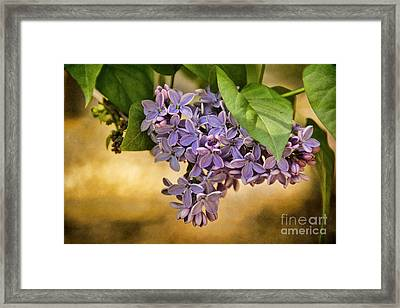 Spring Dreaming Framed Print by Peggy Hughes