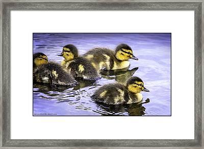 Spring Ducks Tears Gossip Hurts Framed Print