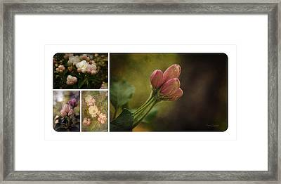 Spring Emerging Collage Framed Print by Mary Machare