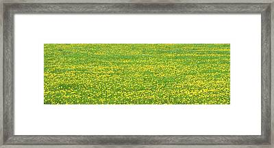 Spring Farm Panorama With Dandelion Bloom In Maine Canvas Poster Print Framed Print