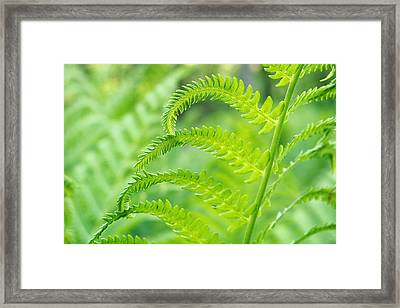 Framed Print featuring the photograph Spring Fern by Lars Lentz