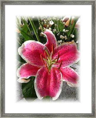 Spring Flower Collection 3 Framed Print