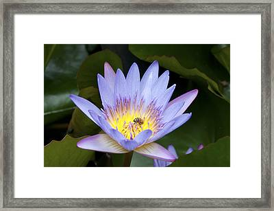 Spring Flower Framed Print by David Yack