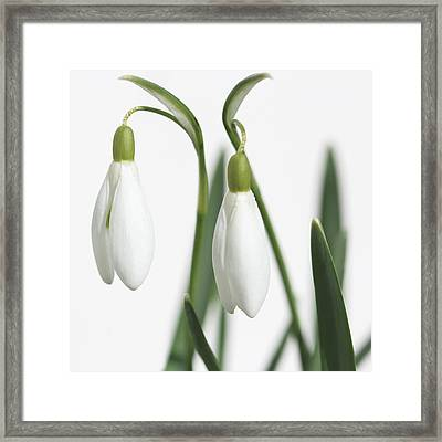 Spring Flower Greatings  Framed Print by Heike Hultsch