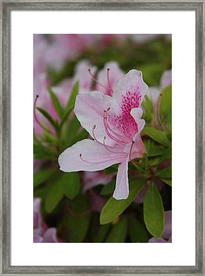 Spring Flower Framed Print by Vadim Levin