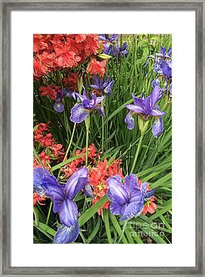 Spring Flowers 1 Framed Print