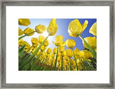 Spring Flowers 5 Framed Print