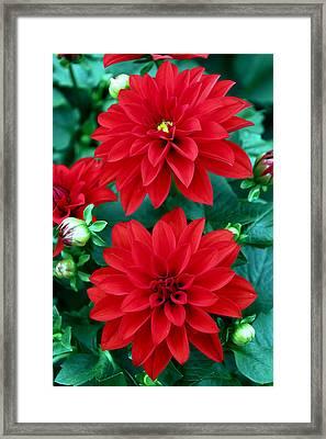 Spring Flowers 5 Framed Print by Bob Slitzan