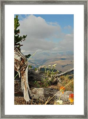 Spring Flowers Framed Print by Birches Photography