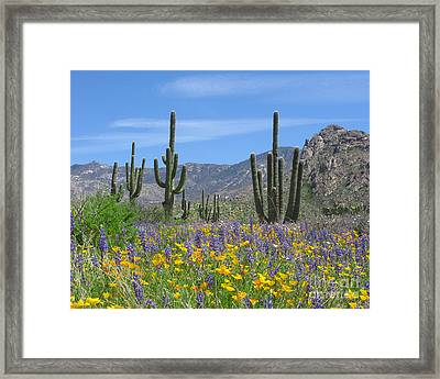 Spring Flowers In The Desert Framed Print
