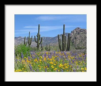 R Arizona Framed Prints